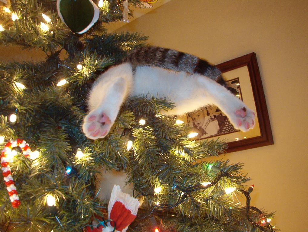 Joyeux Noël mon petit chat